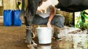 Cepal asegura 70% de la leche dominicana no es apta para procedimientos industriales